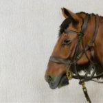 Horse in colour pencil