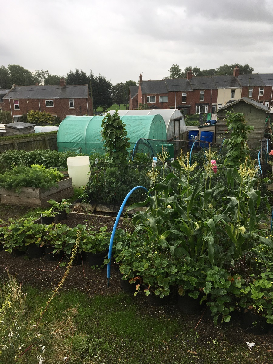 polytunnel in final position